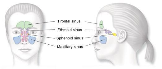 Sinusitis - Sinus & Allergy Treatment NYC & NJ